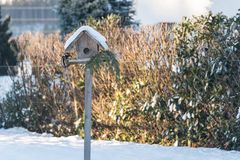 Woodpecker pecks food in winter. Blood woodpecker pecks from a birdhouse in winter forage stock photo