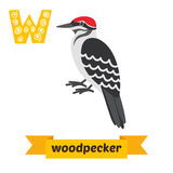 Woodpecker. W letter. Cute children animal alphabet in vector. F. Unny cartoon animals. Vector illustration stock illustration