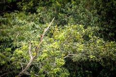 2 woodpeckers на дереве Стоковое фото RF