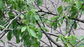Woodpeckers Stock Photos