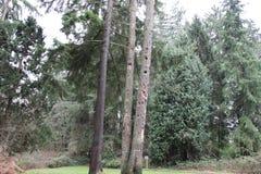 Woodpeckers Holes on a Tree Stock Photos