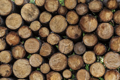 Woodpile έτοιμο για το χειμώνα Στοκ Εικόνες