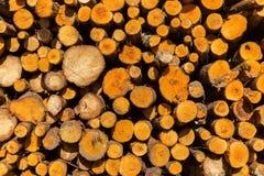 Woodpile ανάβοντας κινηματογράφηση σε πρώτο πλάνο λεπτομέρειας καυσόξυλου ξύλινη Στοκ Εικόνες