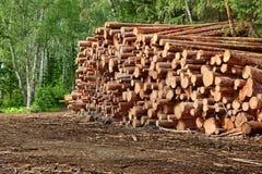 Woodpile από το πριονισμένο πεύκο και κομψά κούτσουρα για τη βιομηχανία δασονομίας Στοκ εικόνα με δικαίωμα ελεύθερης χρήσης