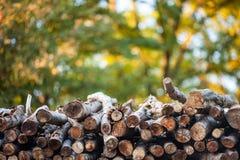 Woodpile με το ζωηρόχρωμο υπόβαθρο Στοκ Φωτογραφία