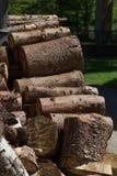 woodpile στην περιοχή μοναστηριών Στοκ Εικόνα