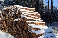 Woodpile в лесе зимы с снегом Стоковая Фотография RF