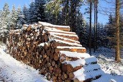 Woodpile в лесе зимы с снегом Стоковые Фото
