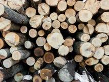 Woodpile 1 дерева золы Стоковые Фотографии RF