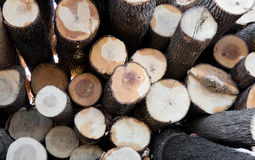 Woodpile 2 дерева золы Стоковое фото RF