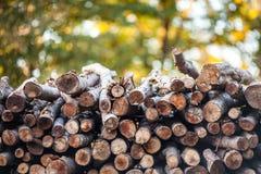 Woodpile с красочной предпосылкой стоковые фотографии rf