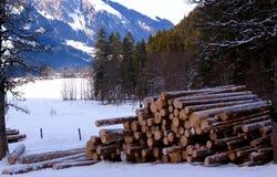 Woodpile Lizenzfreie Stockfotos