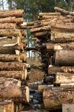 Woodpile Fotografia Stock