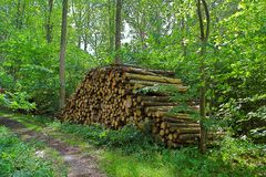 Woodpile. Photo of old woodpile in the forest in springtime Stock Image