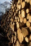 Woodpile. It is a photo of a woodpile Royalty Free Stock Photo