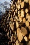 woodpile στοκ φωτογραφία με δικαίωμα ελεύθερης χρήσης