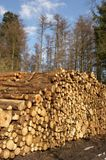 Woodpile. It is a photo of a woodpile Stock Photography