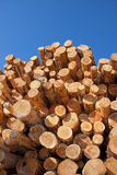 woodpile Obrazy Royalty Free