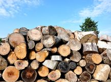 Woodpile. And Christmas tree under a bright sunny day Stock Image
