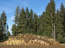 Woodpile Стоковая Фотография RF