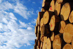 Woodpile. It's a photo of a woodpile in Dolomiti, Italy, Alps Royalty Free Stock Images