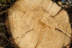 woodpile 库存照片