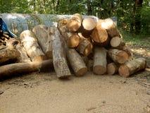 woodpile Image libre de droits