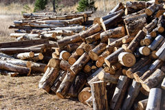 woodpile Photo stock