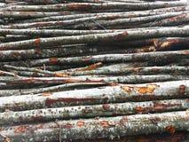 woodpile Stockfotos