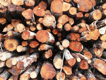 woodpile Stockfotografie