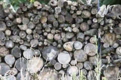 woodpile 免版税库存照片