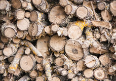 woodpile Стоковое Изображение