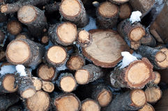 Woodpile background Royalty Free Stock Photos