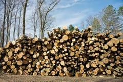 Woodpile of beech logs. Stock Image