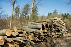 Woodpile of beech logs. Royalty Free Stock Photos