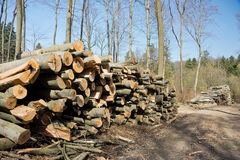 Woodpile of beech logs. Stock Images