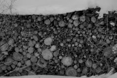 Woodpile In Black and White. With Snow royalty free stock image