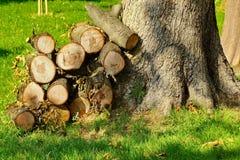 Woodpile Blisko Wielkiego drzewa Na Parkowym gazonie Obraz Stock