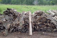 Woodpile For Campers Stock Photo