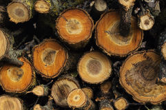 Woodpile. Close-up in the garden autumn stock image