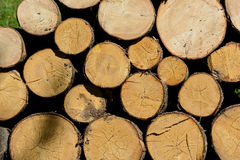 Woodpile royalty free stock image