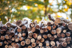 Woodpile with colorful background Royalty Free Stock Photos