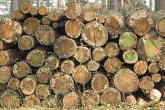 Woodpile con daño Imágenes de archivo libres de regalías