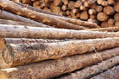 Woodpile of cut Lumber Stock Photography