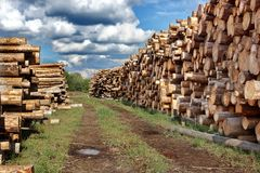 Woodpile of cut Lumber. For forestry industry stock image