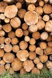 Woodpile of cut Lumber Royalty Free Stock Photography