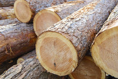 Woodpile of cut trees Stock Photos