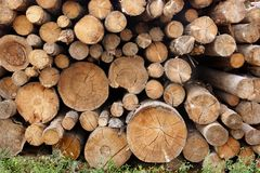 Woodpile of cut trees in the lumberyard Royalty Free Stock Image