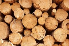 Woodpile of cut trees in the lumberyard Stock Photo