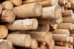 Woodpile of cut trees in the lumberyard Stock Photos